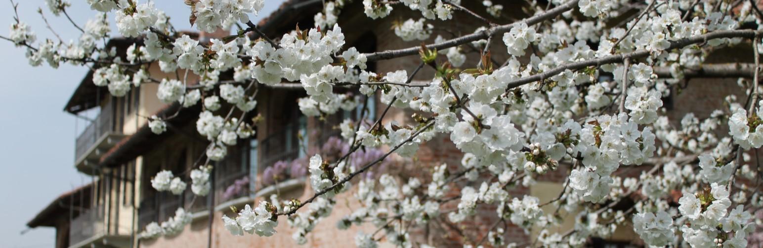 Panorama fiorito Santa Rosalia